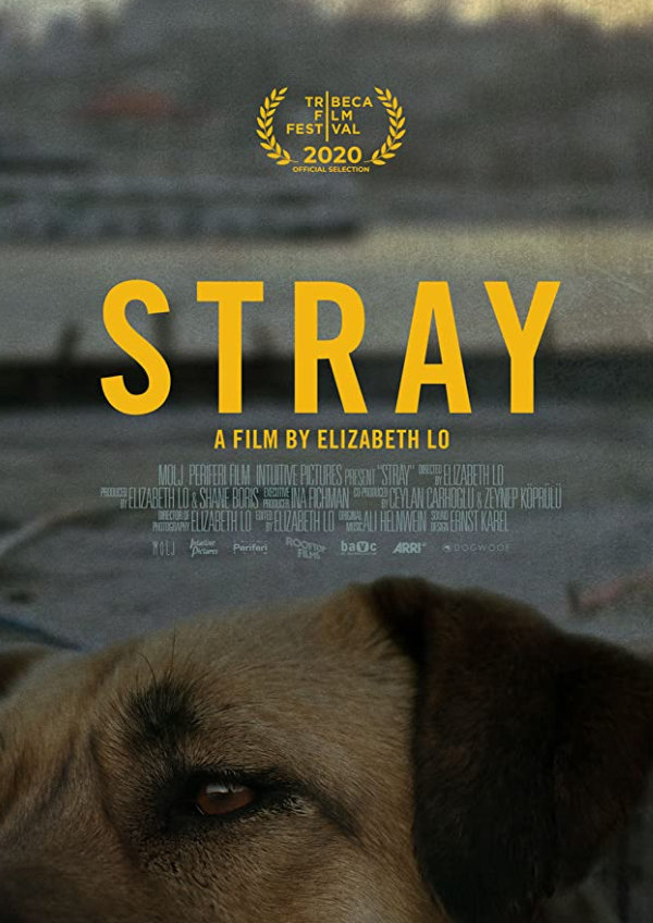 'Stray' movie poster
